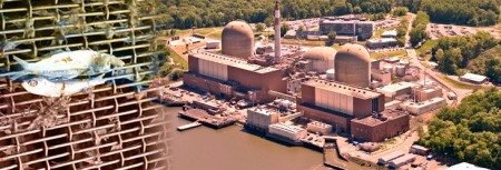 Indian Point and impinged fish