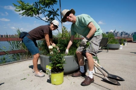 Greenpoint Brooklyn Sweep and tree planting 2012