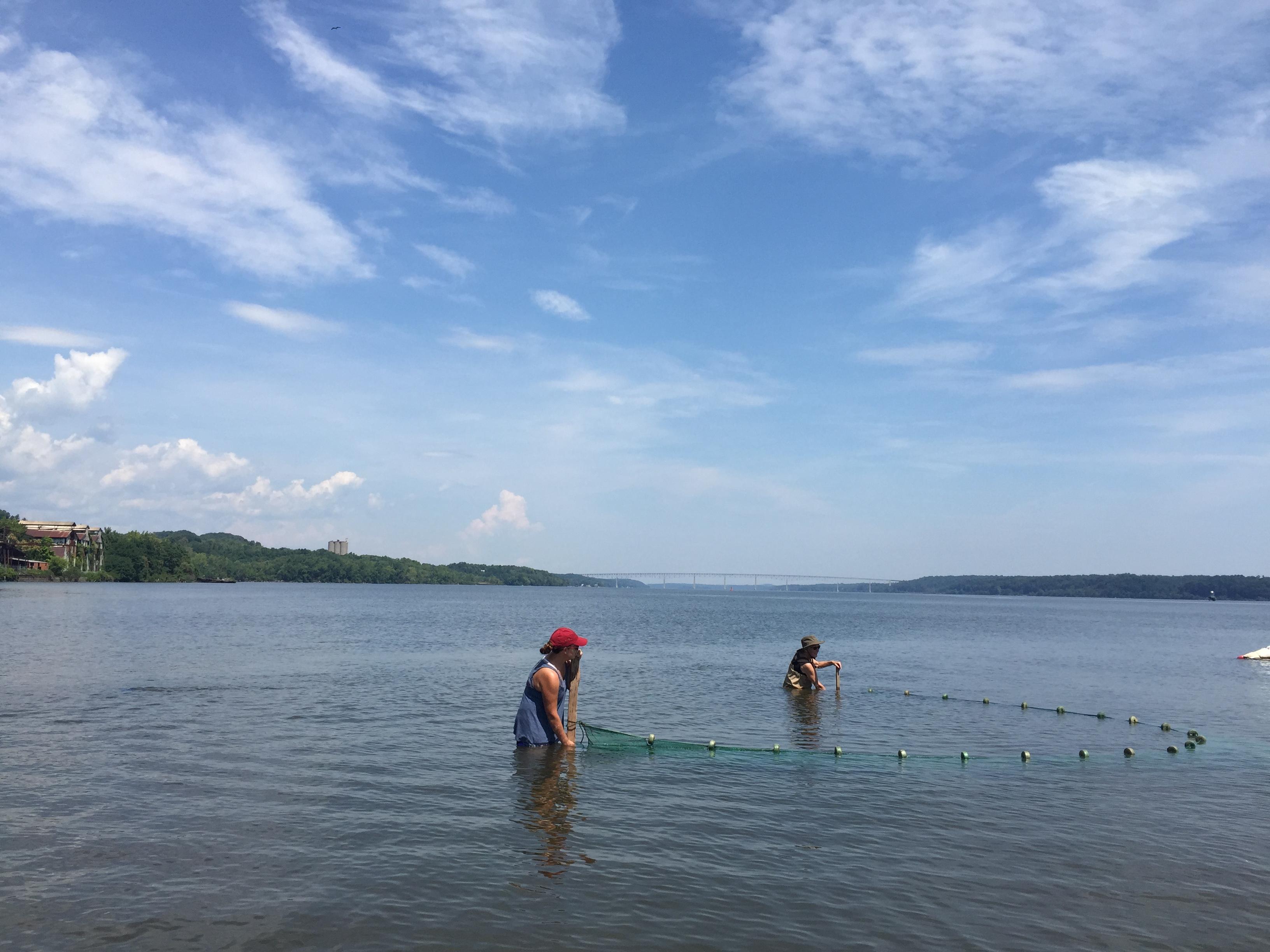 A glimpse of the hudson 39 s abundance riverkeeper for Drag net fishing