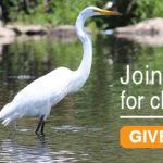 donate-graphic-egret-closeup-BronxRiver-600-2