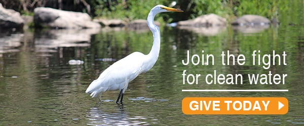 donate-graphic-egret-closeup-BronxRiver-600-2