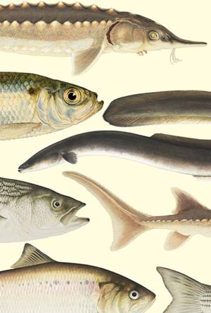 Hudson River Fish