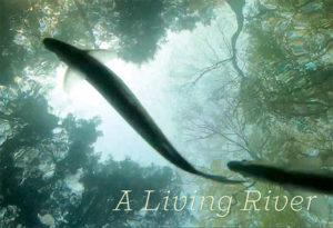 Fishball-livingriver-graphic-600