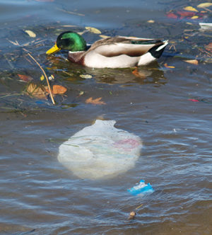 Duck and single-use plastic bag