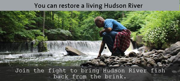 Restore a living river