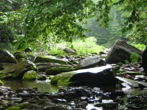 Catskills Stream 3