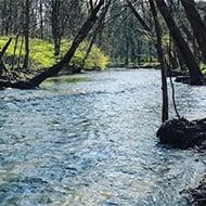 stream-legislation-190